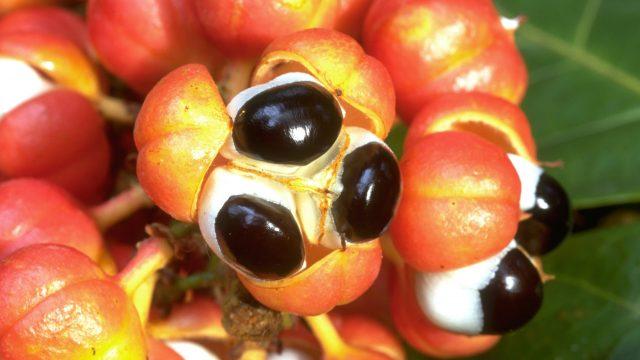 Bildarchiv Nutzpflanzen Beat Ernst