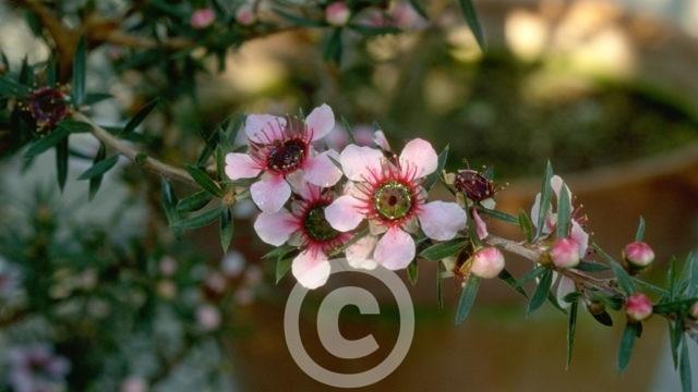 Bildarchiv Nutzpflanzen